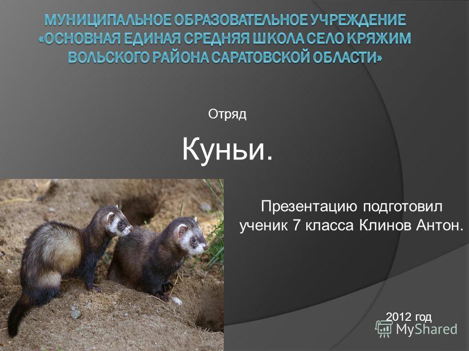 Отряд Куньи. Презентацию подготовил ученик 7 класса Клинов Антон. 2012 год