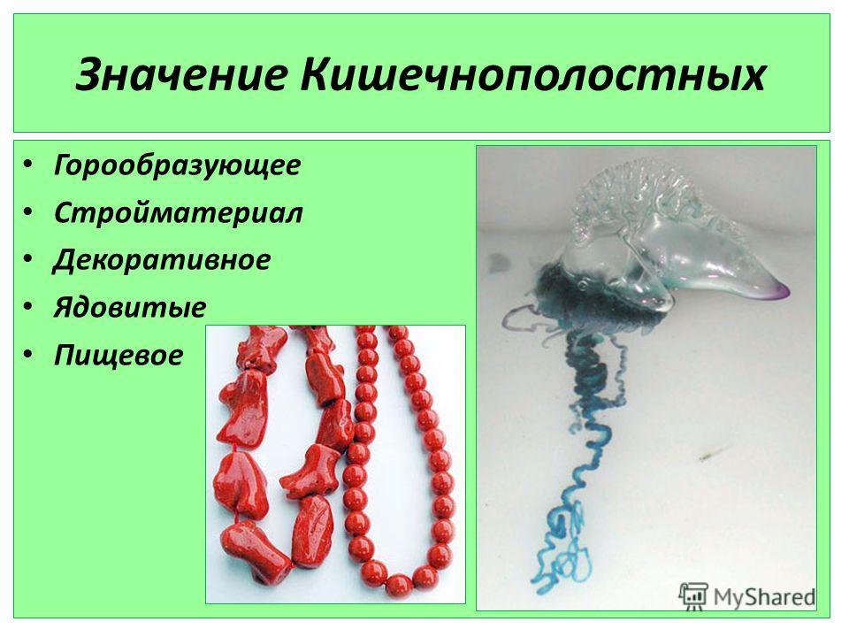 Значение Кишечнополостных Горообразующее Стройматериал Декоративное Ядовитые Пищевое