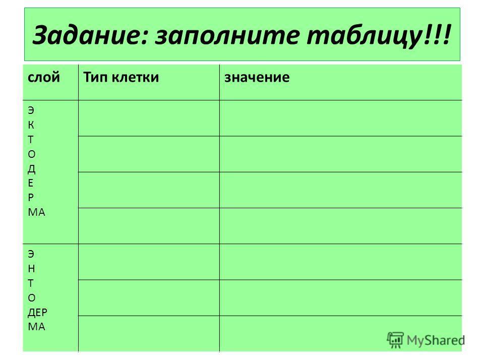 Задание: заполните таблицу!!! слой Тип клеткизначение Э К Т О Д Е Р МА Э Н Т О ДЕР МА