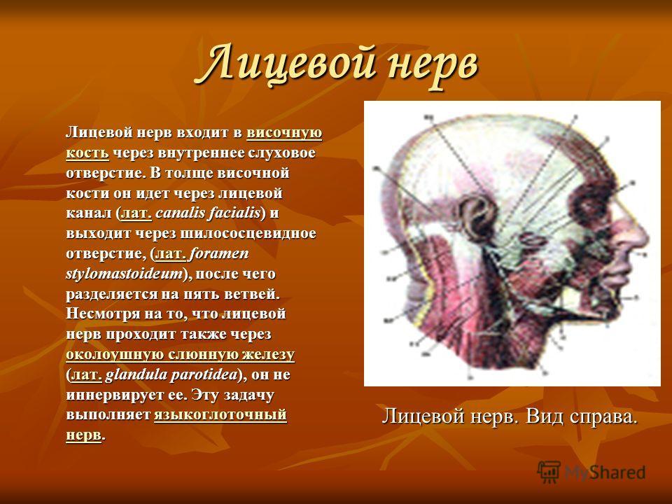 Лицевой нерв Лицевой нерв входит в височную кость через внутреннее слуховое отверстие. В толще височной кости он идет через лицевой канал (лат. canalis facialis) и выходит через шилососцевидное отверстие, (лат. foramen stylomastoideum), после чего ра