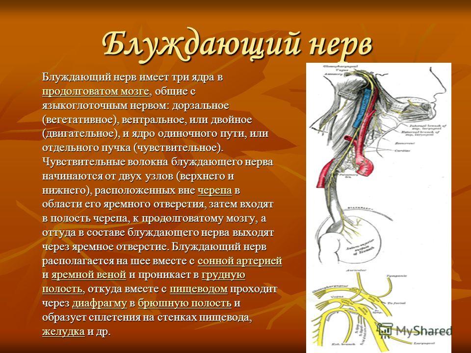 Блуждающий нерв Блуждающий нерв имеет три ядра в продолговатом мозге, общие с языкоглоточным нервом: дорзальное (вегетативное), вентральное, или двойное (двигательное), и ядро одиночного пути, или отдельного пучка (чувствительное). Чувствительные вол
