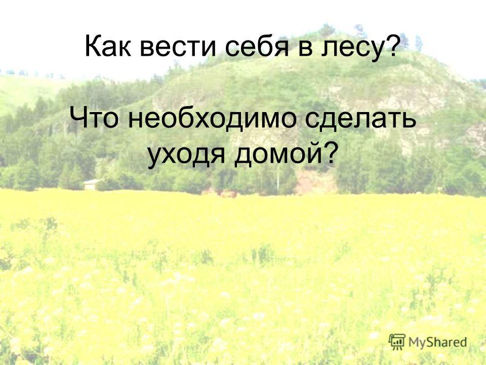 Как вести себя в лесу? Что необходимо сделать уходя домой?