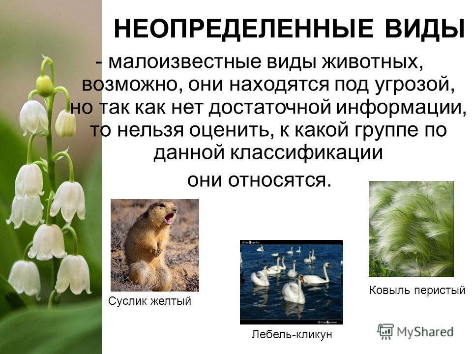 НЕОПРЕДЕЛЕННЫЕ ВИДЫ - малоизвестные виды животных, возможно, они находятся под угрозой, но так как нет достаточной информации, то нельзя оценить, к какой группе по данной классификации они относятся. Ковыль перистый Суслик желтый Лебель-кликун