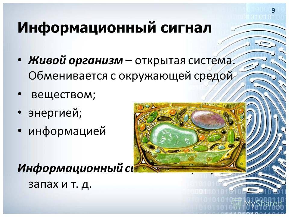 Информационный сигнал Живой организм – открытая система. Обменивается с окружающей средой веществом; энергией; информацией Информационный сигнал: свет, звук, запах и т. д. 9