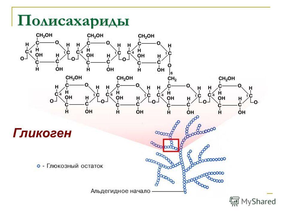 Полисахариды Гликоген