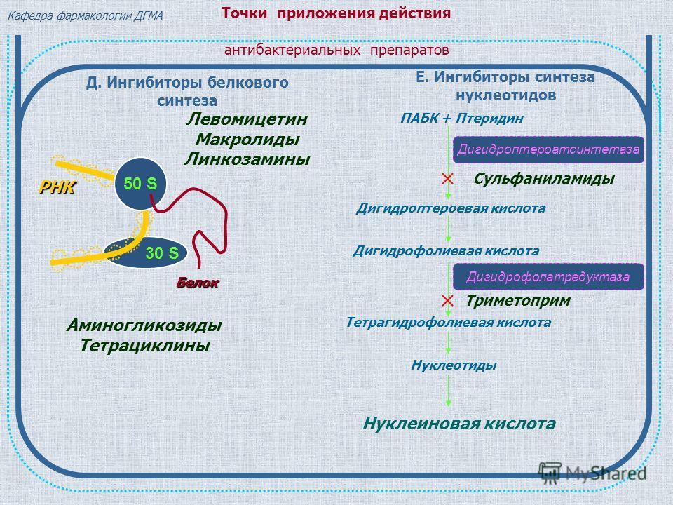 Белок РНК Левомицетин Макролиды Линкозамины Д. Ингибиторы белкового синтеза 30 S 50 S Аминогликозиды Тетрациклины Е. Ингибиторы синтеза нуклеотидов ПАБК + Птеридин Дигидроптероатсинтетаза Дигидроптероевая кислота Дигидрофолиевая кислота Тетрагидрофол
