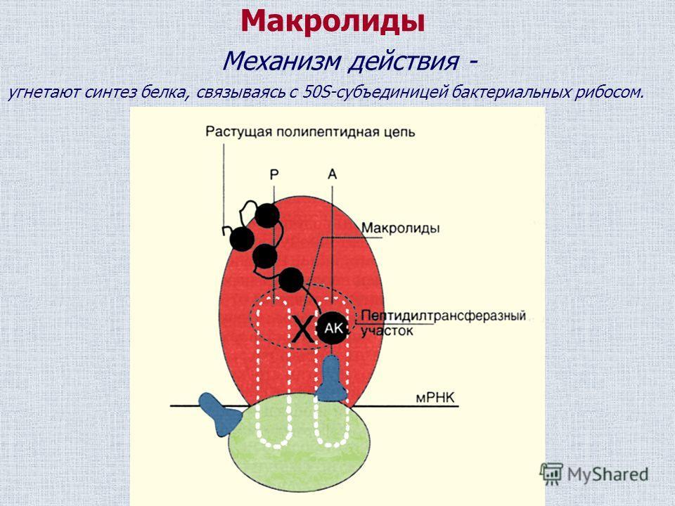 Макролиды Механизм действия - угнетают синтез белка, связываясь с 50S-субъединицей бактериальных рибосом.