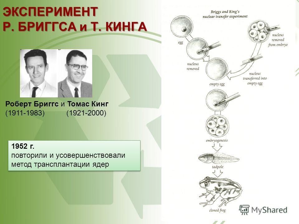 ЭКСПЕРИМЕНТ Р. БРИГГСА и Т. КИНГА Роберт Бриггс и Томас Кинг (1911-1983) (1921-2000) 1952 г. повторили и усовершенствовали метод трансплантации ядер 1952 г. повторили и усовершенствовали метод трансплантации ядер