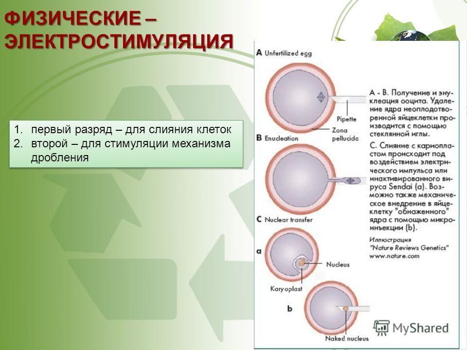 ФИЗИЧЕСКИЕ – ЭЛЕКТРОСТИМУЛЯЦИЯ 1. первый разряд – для слияния клеток 2. второй – для стимуляции механизма дробления 1. первый разряд – для слияния клеток 2. второй – для стимуляции механизма дробления