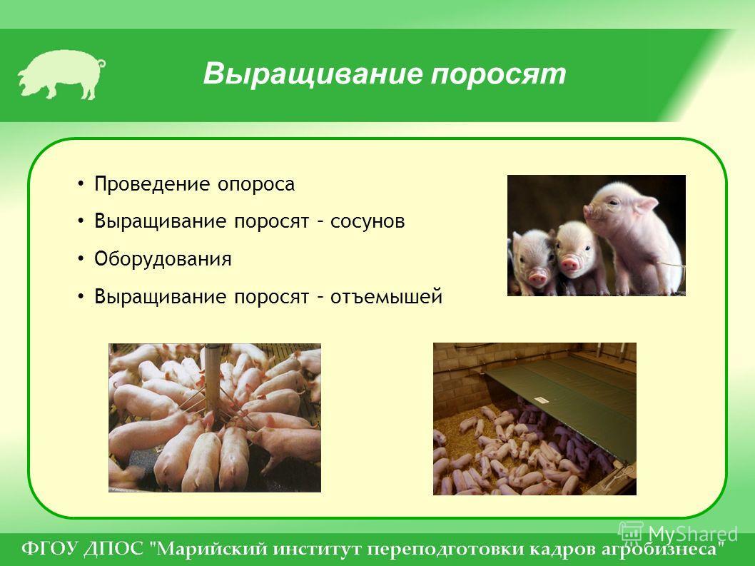Выращивание поросят Проведение опороса Выращивание поросят – сосунов Оборудования Выращивание поросят – отъемышей