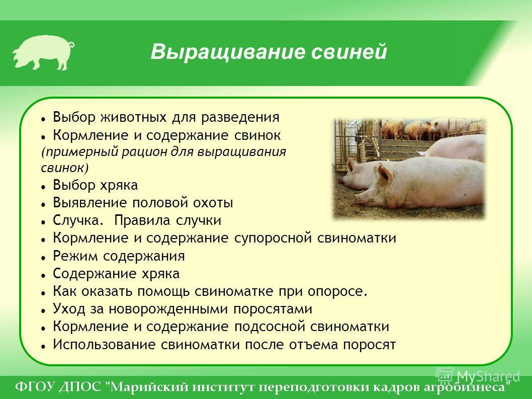 Выращивание свиней Выбор животных для разведения Кормление и содержание свинок (примерный рацион для выращивания свинок) Выбор хряка Выявление половой охоты Случка. Правила случки Кормление и содержание супоросной свиноматки Режим содержания Содержан