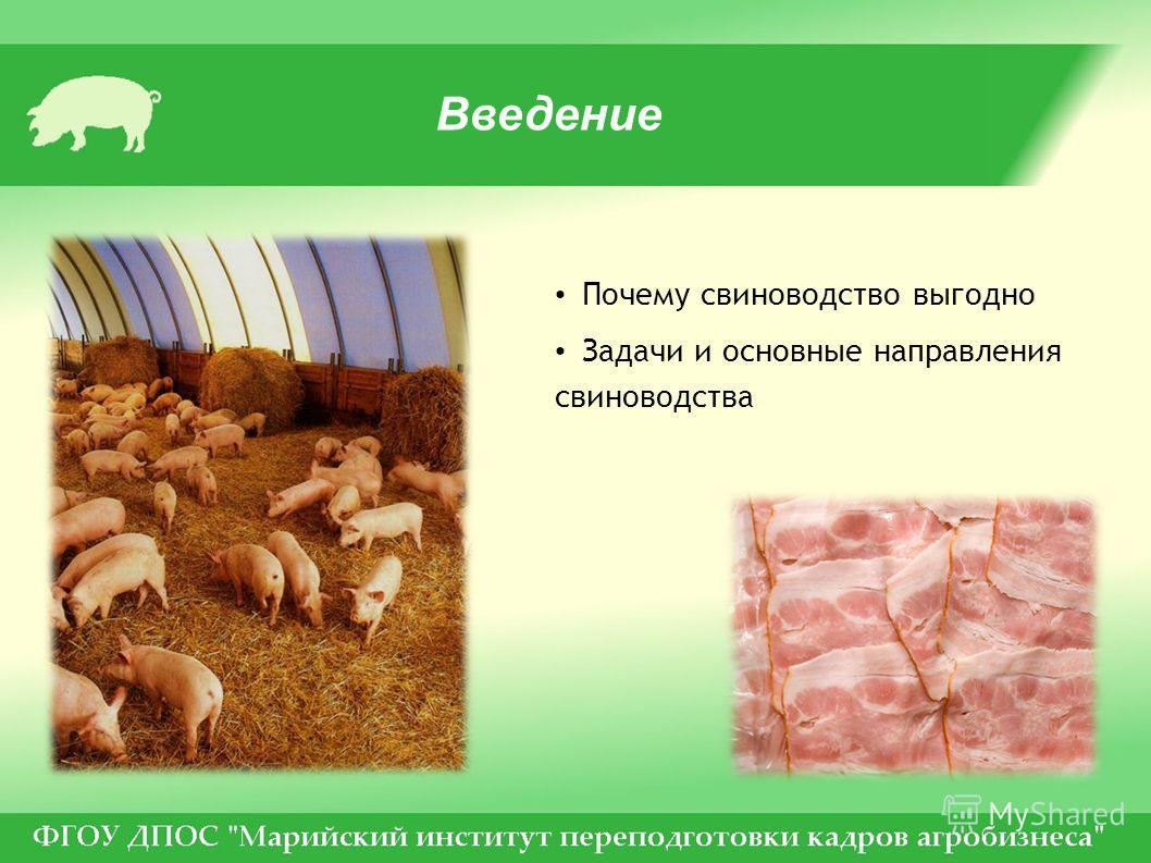 Введение Почему свиноводство выгодно Задачи и основные направления свиноводства