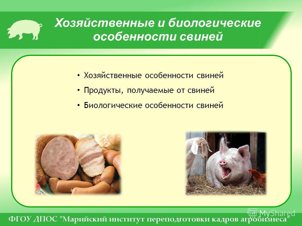 Хозяйственные и биологические особенности свиней Хозяйственные особенности свиней Продукты, получаемые от свиней Биологические особенности свиней