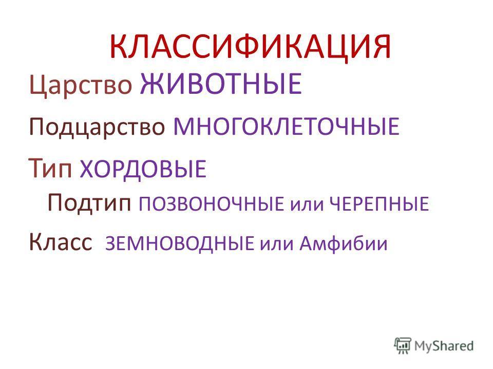 КЛАССИФИКАЦИЯ Царство ЖИВОТНЫЕ Подцарство МНОГОКЛЕТОЧНЫЕ Тип ХОРДОВЫЕ Подтип ПОЗВОНОЧНЫЕ или ЧЕРЕПНЫЕ Класс ЗЕМНОВОДНЫЕ или Амфибии
