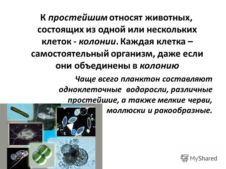 К простейшим относят животных, состоящих из одной или нескольких клеток - колонии. Каждая клетка – самостоятельный организм, даже если они объединены в колонию Чаще всего планктон составляют одноклеточные водоросли, различные простейшие, а также мелк