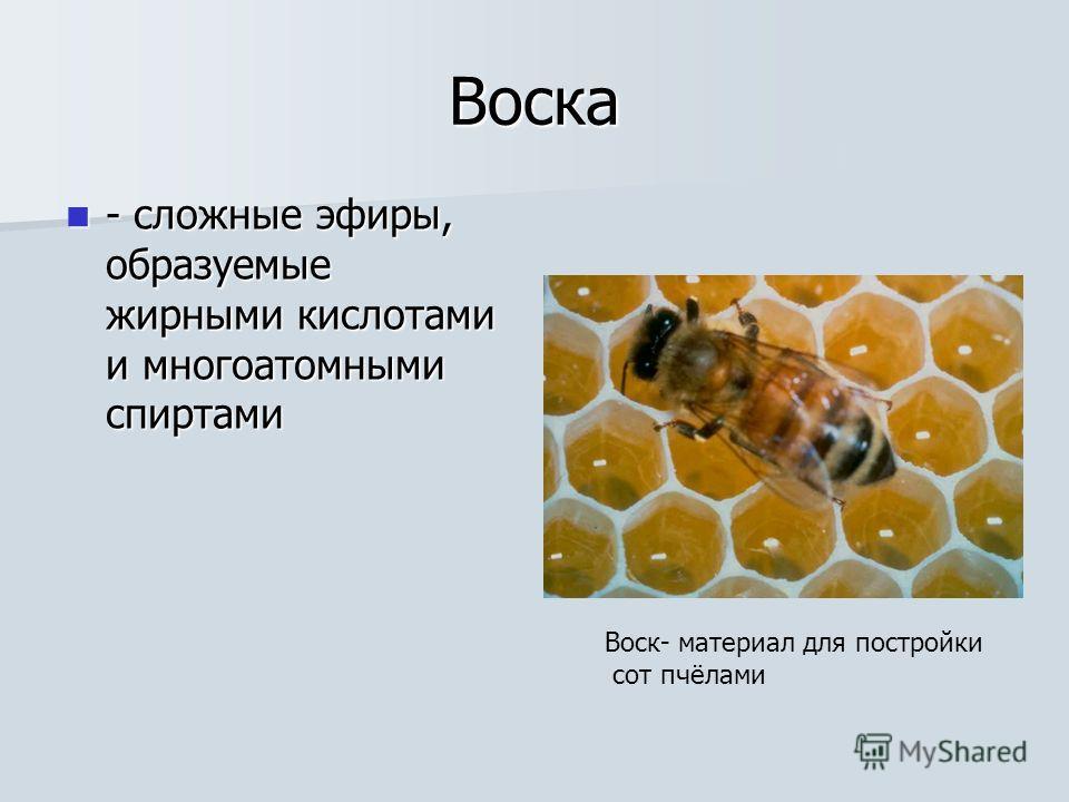 Воска - сложные эфиры, образуемые жирными кислотами и многоатомными спиртами - сложные эфиры, образуемые жирными кислотами и многоатомными спиртами Воск- материал для постройки сот пчёлами