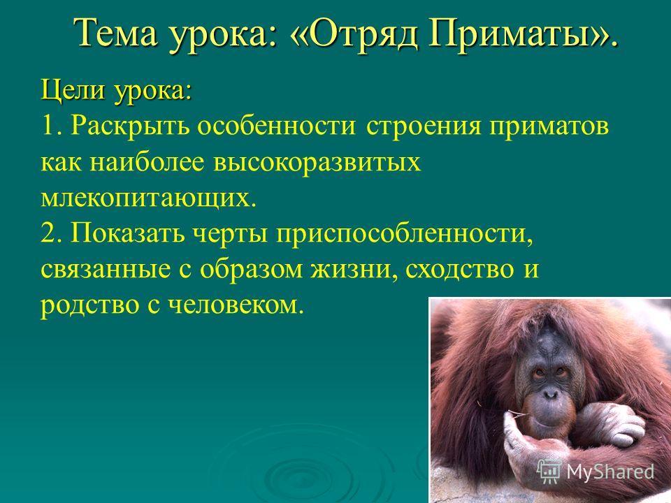 Цели урока: 1. Раскрыть особенности строения приматов как наиболее высокоразвитых млекопитающих. 2. Показать черты приспособленности, связанные с образом жизни, сходство и родство с человеком. Тема урока: «Отряд Приматы».