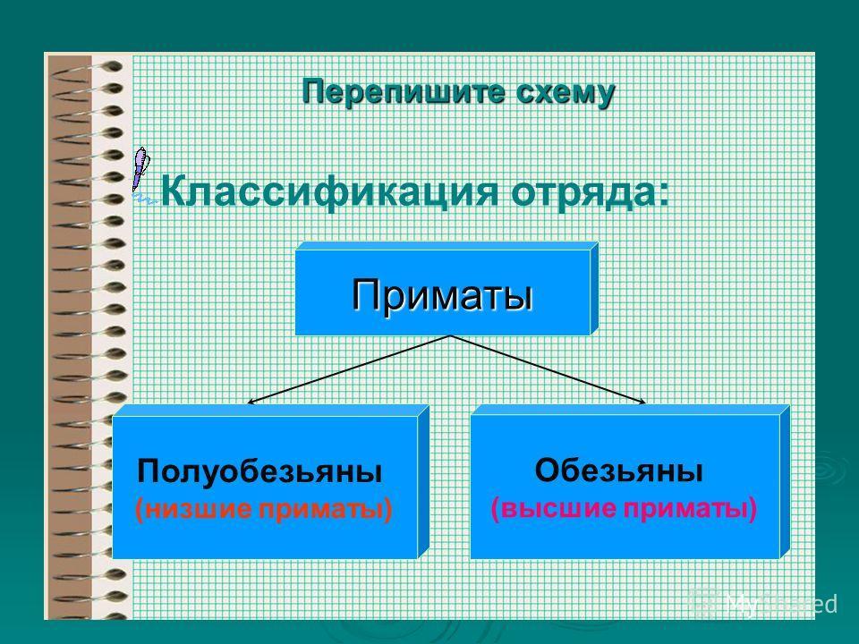 Перепишите схему Классификация отряда: Приматы Полуобезьяны (низшие приматы) Обезьяны (высшие приматы)
