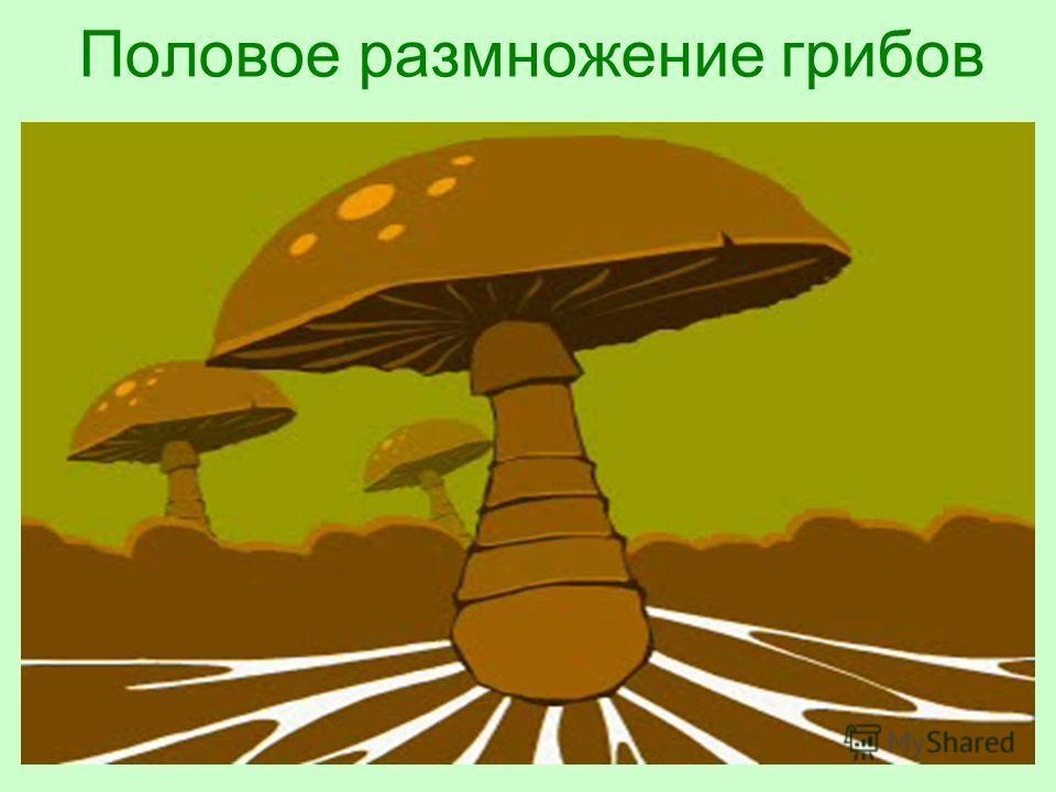 Половое размножение грибов