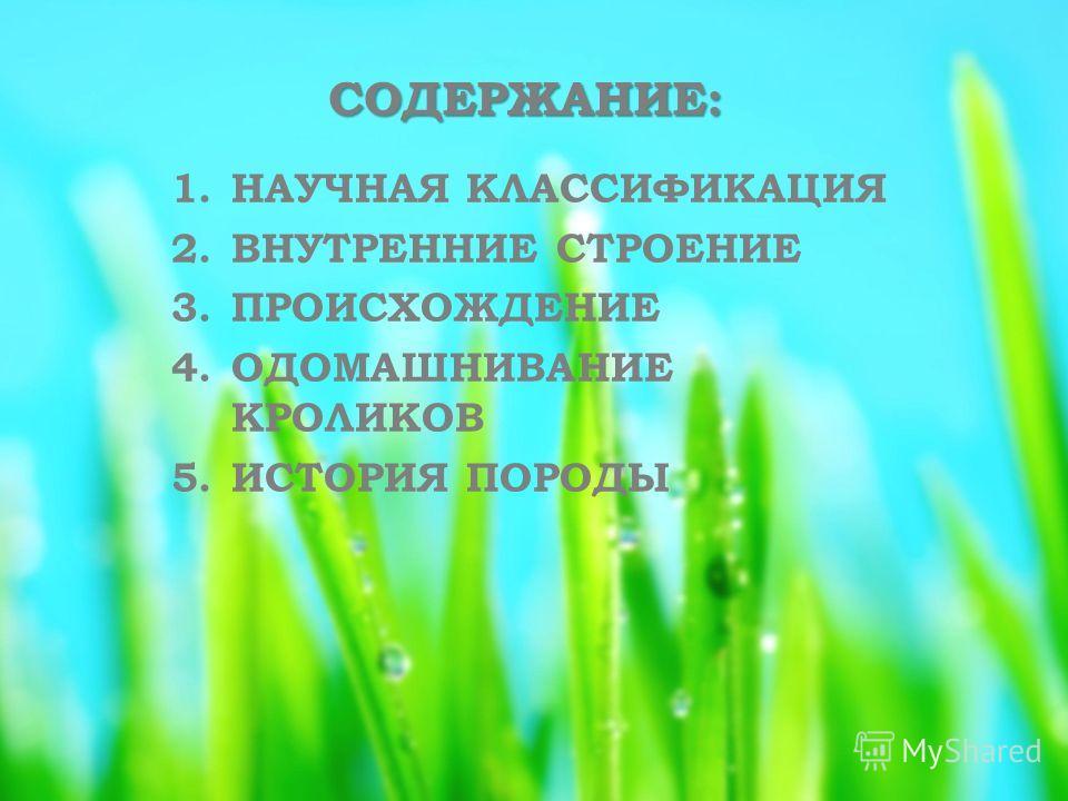 СОДЕРЖАНИЕ: 1. НАУЧНАЯ КЛАССИФИКАЦИЯ 2. ВНУТРЕННИЕ СТРОЕНИЕ 3. ПРОИСХОЖДЕНИЕ 4. ОДОМАШНИВАНИЕ КРОЛИКОВ 5. ИСТОРИЯ ПОРОДЫ