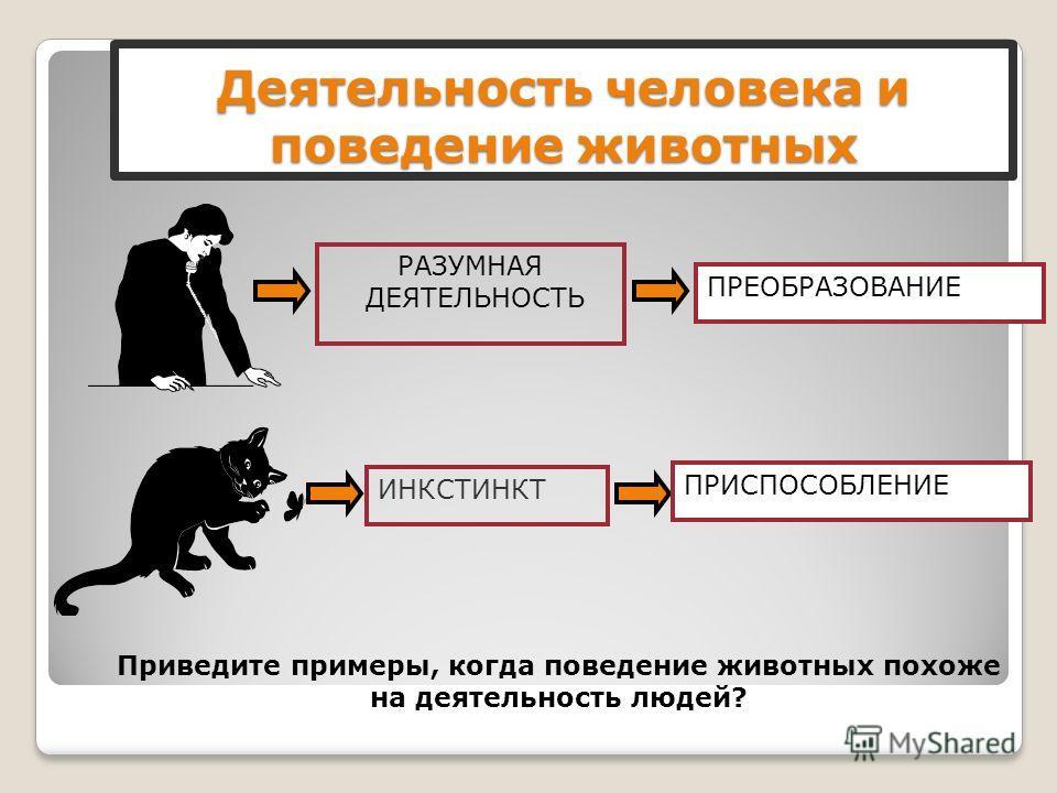 Деятельность человека и поведение животных Приведите примеры, когда поведение животных похоже на деятельность людей? ИНКСТИНКТПРИСПОСОБЛЕНИЕРАЗУМНАЯ ДЕЯТЕЛЬНОСТЬ ПРЕОБРАЗОВАНИЕ