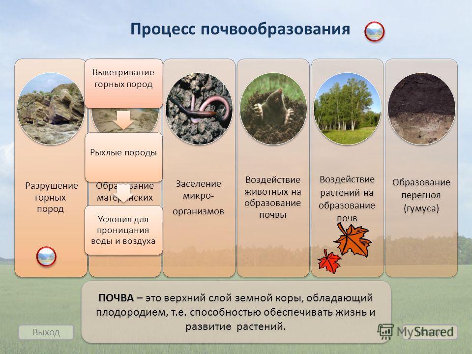 Разрушение горных пород Образование материнских пород Заселение микро- организмов Воздействие животных на образование почвы Воздействие растений на образование почв Образование перегноя (гумуса) Процесс почвообразования Выход Назад ПОЧВА – это верхни
