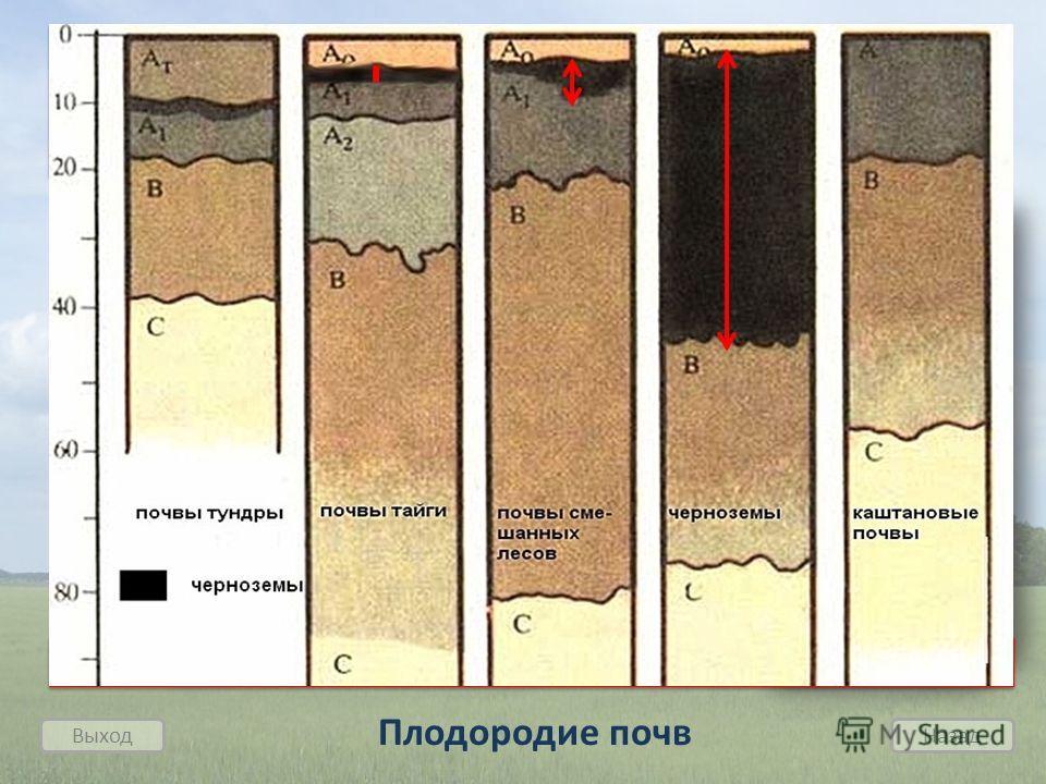 Плодородие почв зависит от мощности горизонта накопления Выход Назад 1. Важнейшим свойством почвы является ее плодородие, т.е. способность обеспечивать рост и развитие растений. 2. Важное значение для плодородия имеет перегной, в котором накапливаютс