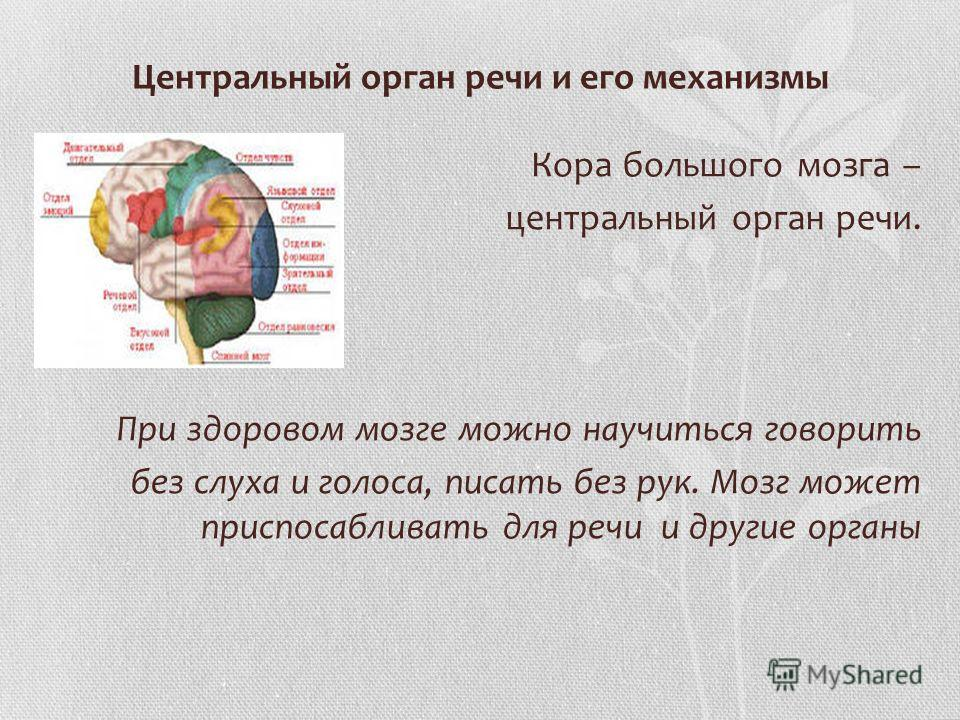 Центральный орган речи и его механизмы Кора большого мозга – центральный орган речи. При здоровом мозге можно научиться говорить без слуха и голоса, писать без рук. Мозг может приспосабливать для речи и другие органы