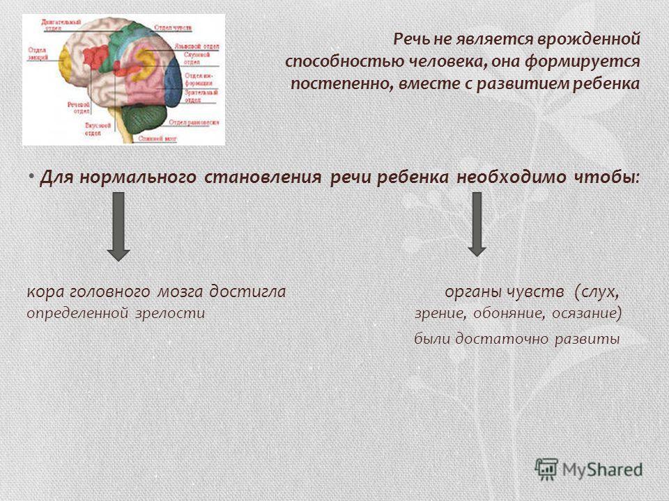 Речь не является врожденной способностью человека, она формируется постепенно, вместе с развитием ребенка Для нормального становления речи ребенка необходимо чтобы: кора головного мозга достигла органы чувств (слух, определенной зрелости зрение, обон