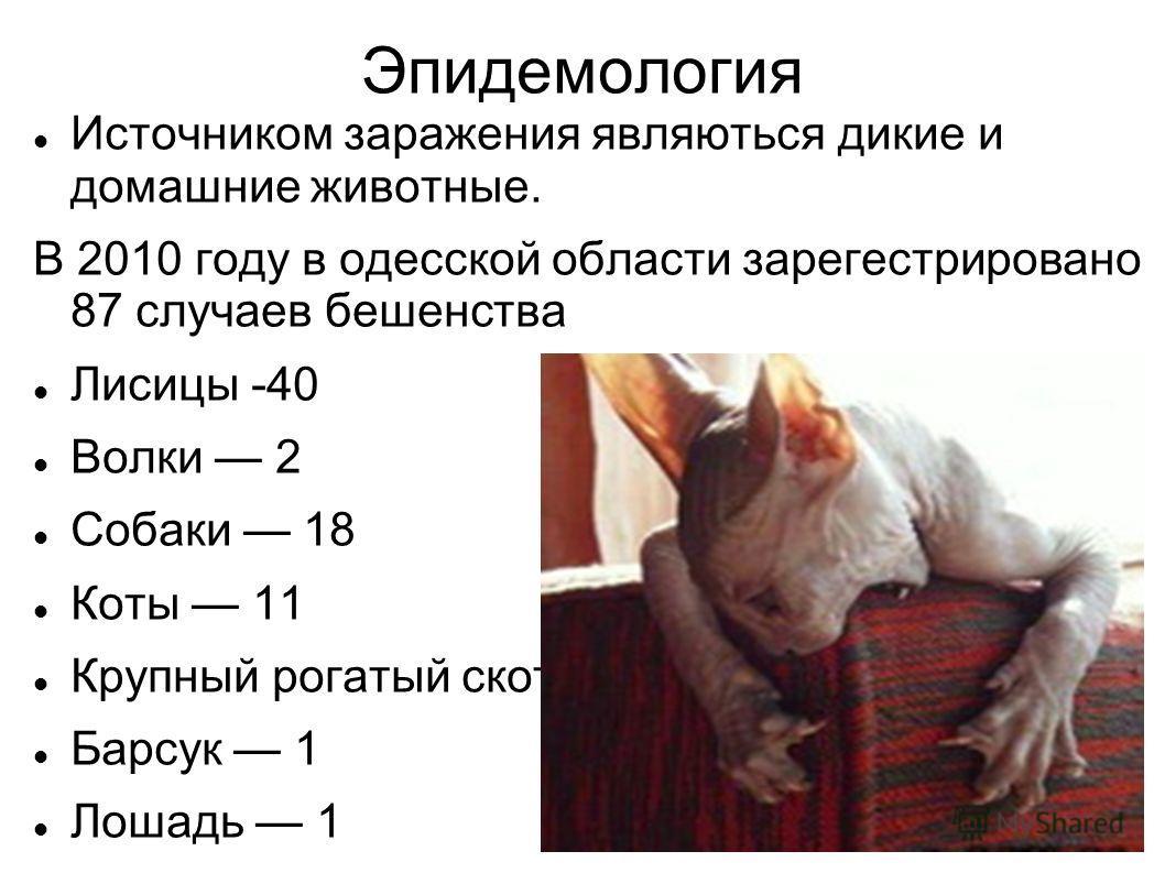 Эпидемология Источником заражения являються дикие и домашние животные. В 2010 году в одесской области зарегестрировано 87 случаев бешенства Лисицы -40 Волки 2 Собаки 18 Коты 11 Крупный рогатый скот 8 Барсук 1 Лошадь 1 Куницы 4 Ласка - 2
