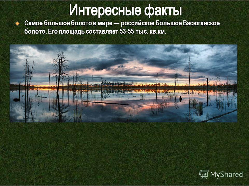 Самое большое болото в мире российское Большое Васюганское болото. Его площадь составляет 53-55 тыс. кв.км. Самое большое болото в мире российское Большое Васюганское болото. Его площадь составляет 53-55 тыс. кв.км.