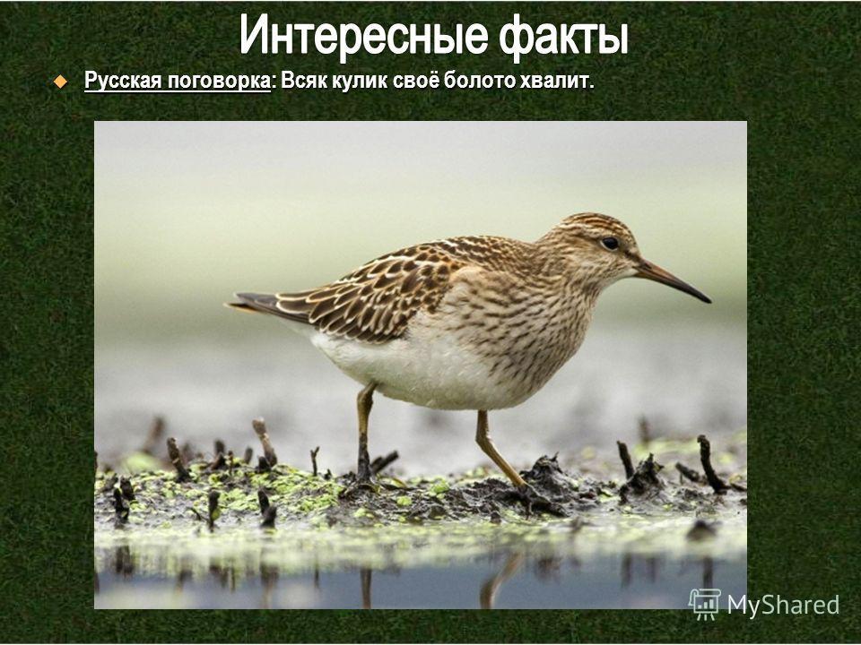 Русская поговорка: Всяк кулик своё болото хвалит. Русская поговорка: Всяк кулик своё болото хвалит.