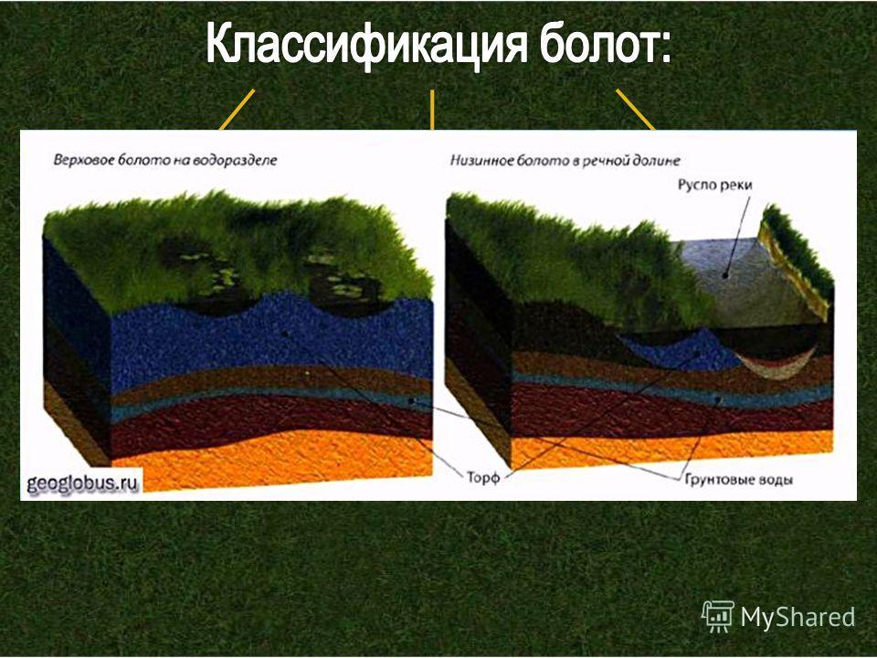 Низинные Переходные Верховые тип болот с богатым водно- минеральным питанием, в основном за счёт грунтовых вод. Расположены в поймах рек, по берегам озёр, в местах выхода ключей, в низких местах. по характеру растительности и умеренному минеральному
