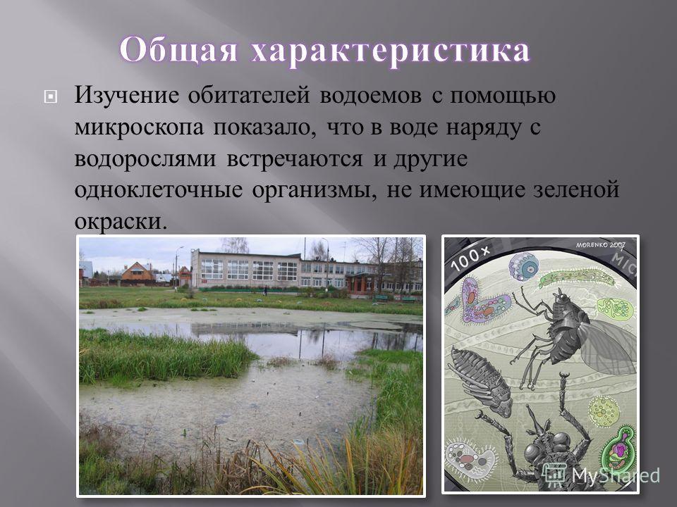 Изучение обитателей водоемов с помощью микроскопа показало, что в воде наряду с водорослями встречаются и другие одноклеточные организмы, не имеющие зеленой окраски.