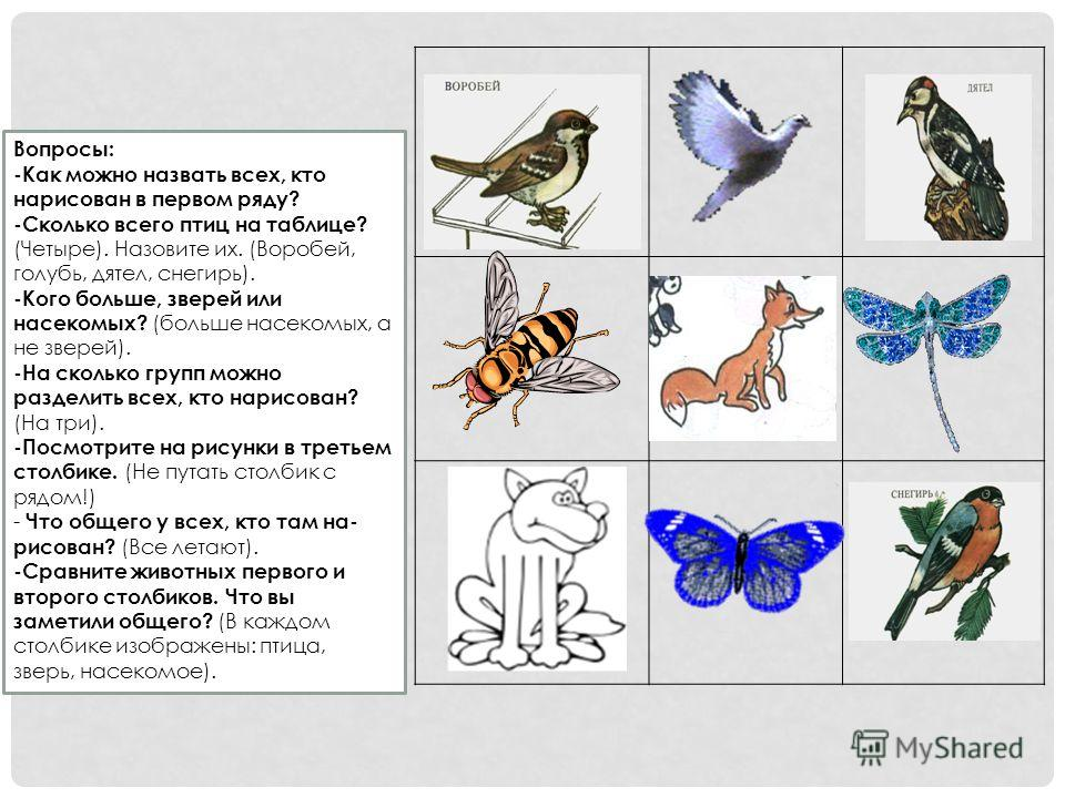 Вопросы: -Как можно назвать всех, кто нарисован в первом ряду? -Сколько всего птиц на таблице? (Четыре). Назовите их. (Воробей, голубь, дятел, снегирь). -Кого больше, зверей или насекомых? (больше насекомых, а не зверей). -На сколько групп можно разд