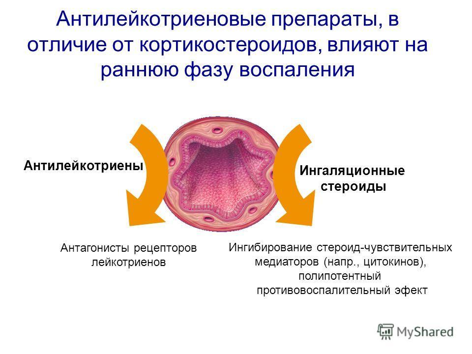 Ингибирование стероид-чувствительных медиаторов (напр., цитокинов), полипотентный противовоспалительный эфект Антилейкотриены Антилейкотриеновые препараты, в отличие от кортикостероидов, влияют на раннюю фазу воспаления Ингаляционные стероиды Антагон