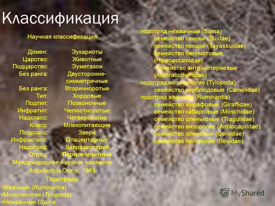 Классификация Научная классификация Домен: Эукариоты Царство: Животные Подцарство: Эуметазои Без ранга: Двусторонне- симметричные Без ранга: Вторичноротые Тип: Хордовые Подтип: Позвоночные Инфратип: Челюстноротые Надкласс: Четвероногие Класс: Млекопи