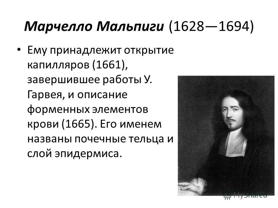 Марчелло Мальпиги (16281694) Ему принадлежит открытие капилляров (1661), завершившее работы У. Гарвея, и описание форменных элементов крови (1665). Его именем названы почечные тельца и слой эпидермиса.