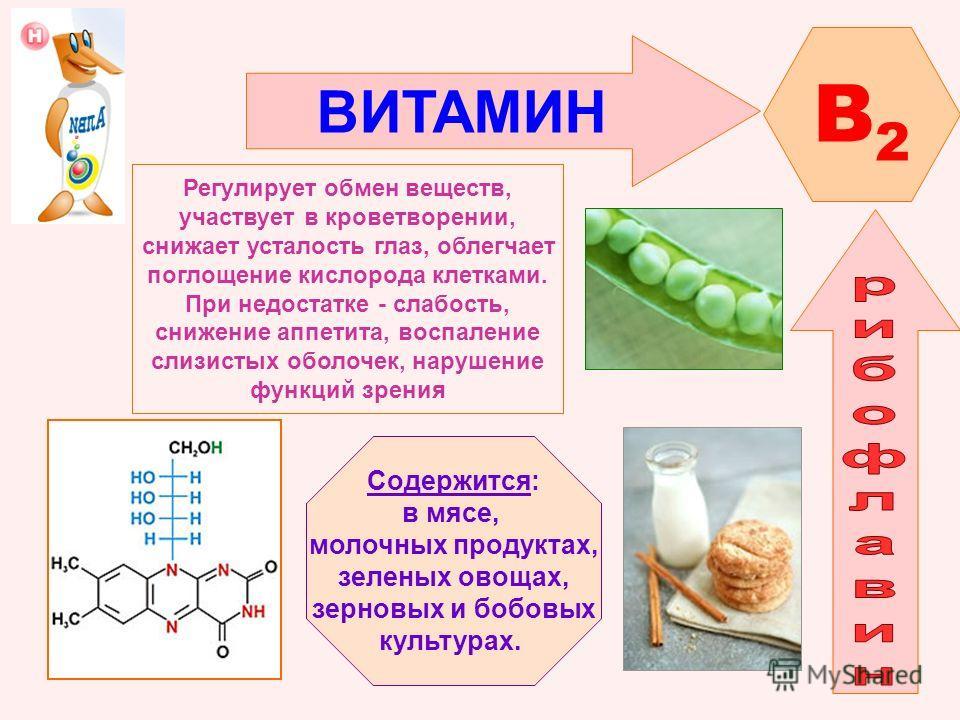 ВИТАМИН B2B2 Регулирует обмен веществ, участвует в кроветворении, снижает усталость глаз, облегчает поглощение кислорода клетками. При недостатке - слабость, снижение аппетита, воспаление слизистых оболочек, нарушение функций зрения Содержится: в мяс