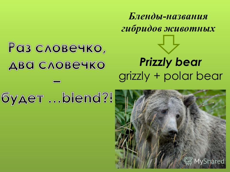 Prizzly bear grizzly + polar bear Бленды-названия гибридов животных