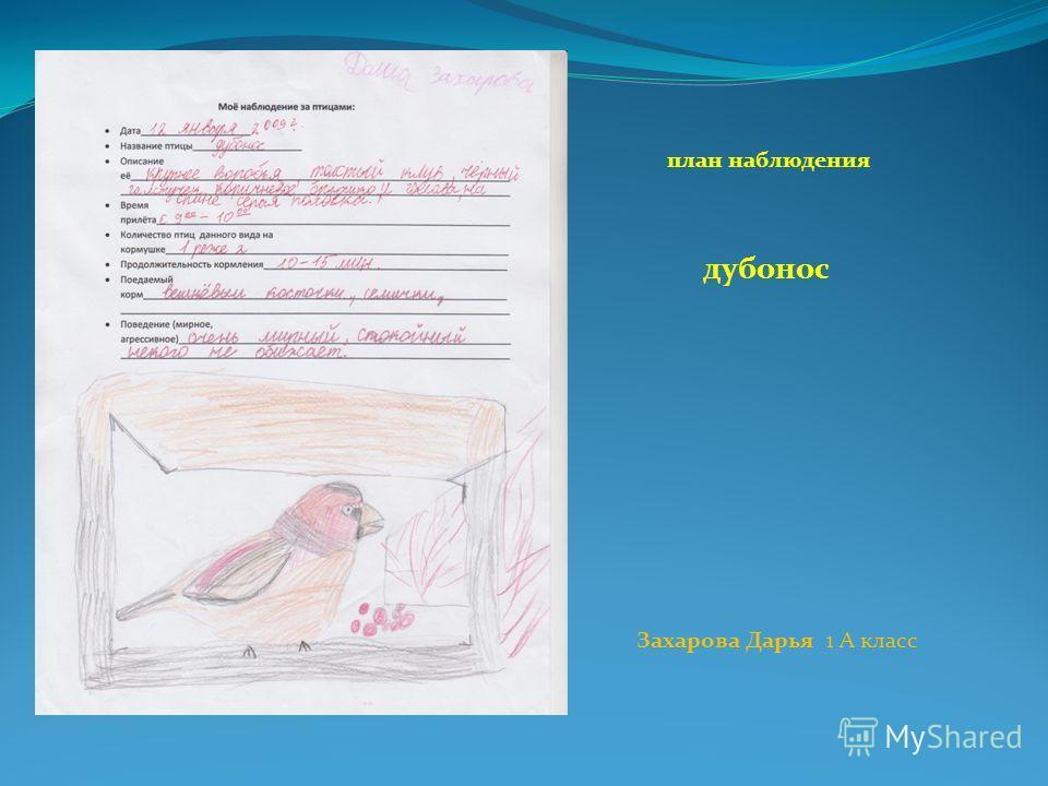план наблюдения дубонос Захарова Дарья 1 А класс