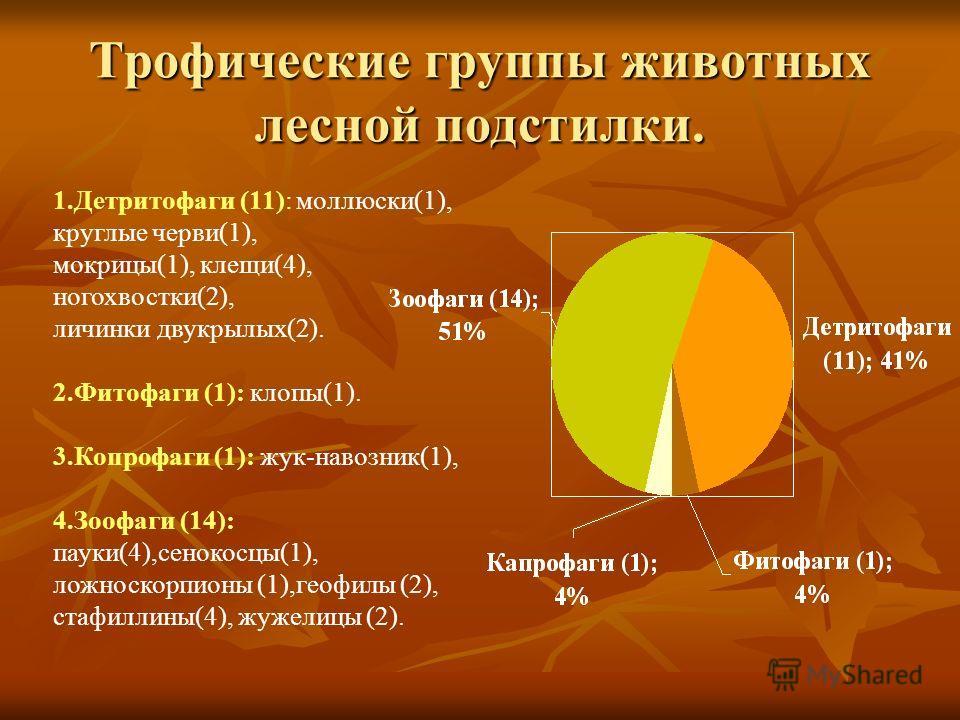 Трофические группы животных лесной подстилки. 1. Детритофаги (11): моллюски(1), круглые черви(1), мокрицы(1), клещи(4), ногохвостки(2), личинки двукрылых(2). 2. Фитофаги (1): клопы(1). 3. Копрофаги (1): жук-навозник(1), 4. Зоофаги (14): пауки(4),сено