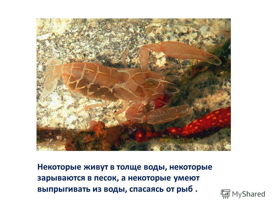 Некоторые живут в толще воды, некоторые зарываются в песок, а некоторые умеют выпрыгивать из воды, спасаясь от рыб.