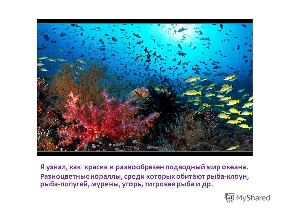 Я узнал, как красив и разнообразен подводный мир океана. Разноцветные кораллы, среди которых обитают рыба-клоун, рыба-попугай, мурены, угорь, тигровая рыба и др.