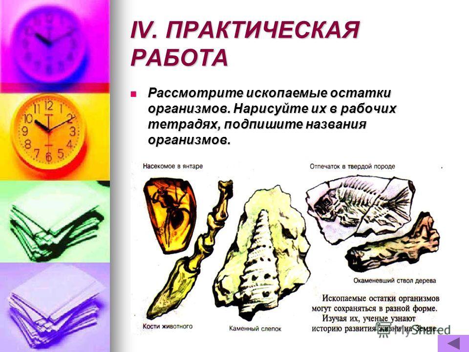 IV. ПРАКТИЧЕСКАЯ РАБОТА Рассмотрите ископаемые остатки организмов. Нарисуйте их в рабочих тетрадях, подпишите названия организмов. Рассмотрите ископаемые остатки организмов. Нарисуйте их в рабочих тетрадях, подпишите названия организмов.
