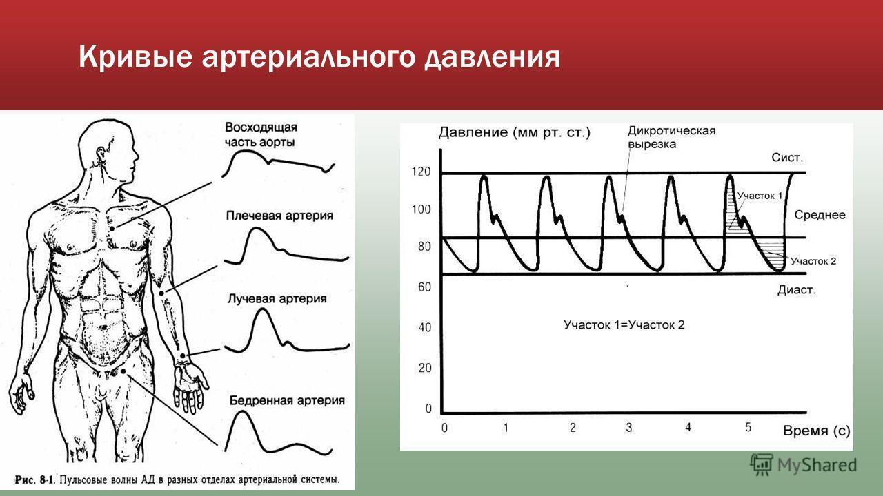 Кривые артериального давления