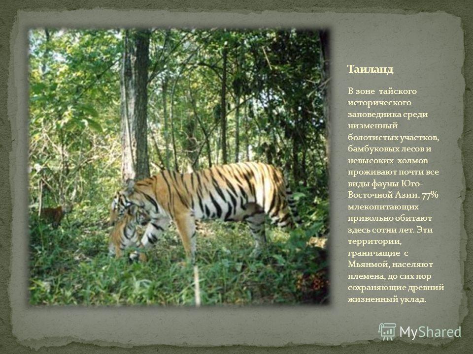 В зоне тайского исторического заповедника среди низменный болотистых участков, бамбуковых лесов и невысоких холмов проживают почти все виды фауны Юго- Восточной Азии. 77% млекопитающих привольно обитают здесь сотни лет. Эти территории, граничащие с М