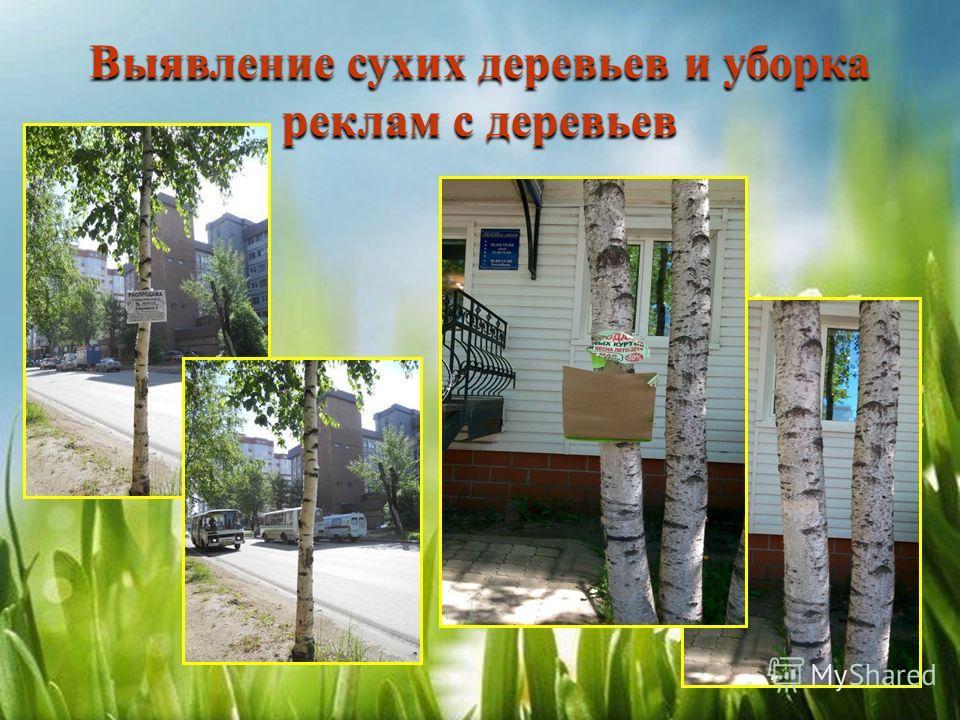 Выявление сухих деревьев и уборка реклам с деревьев