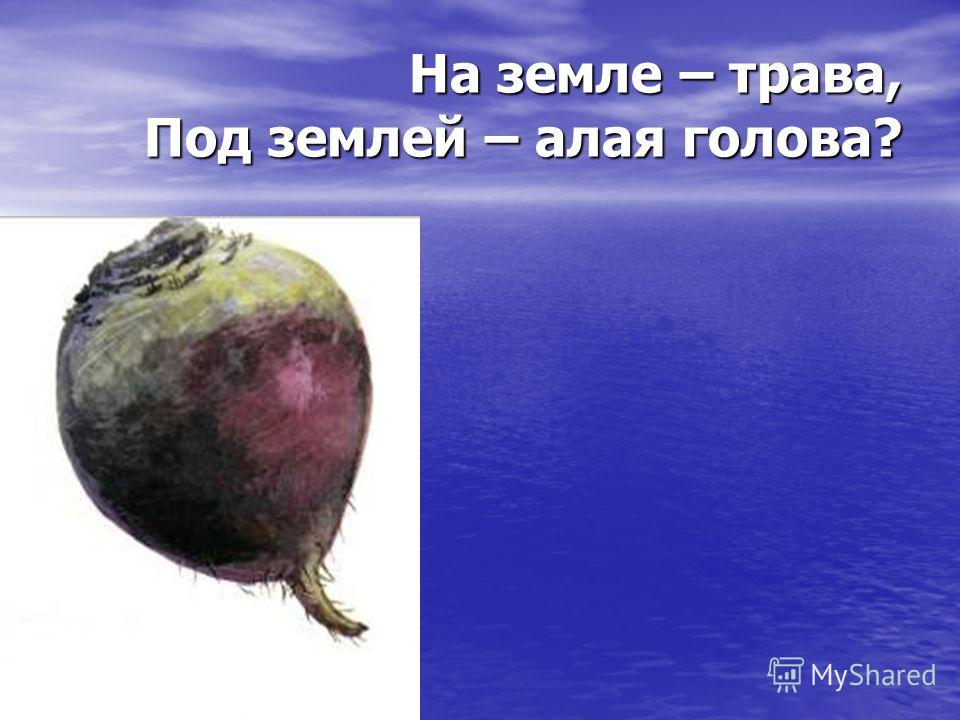 На земле – трава, Под землей – алая голова?