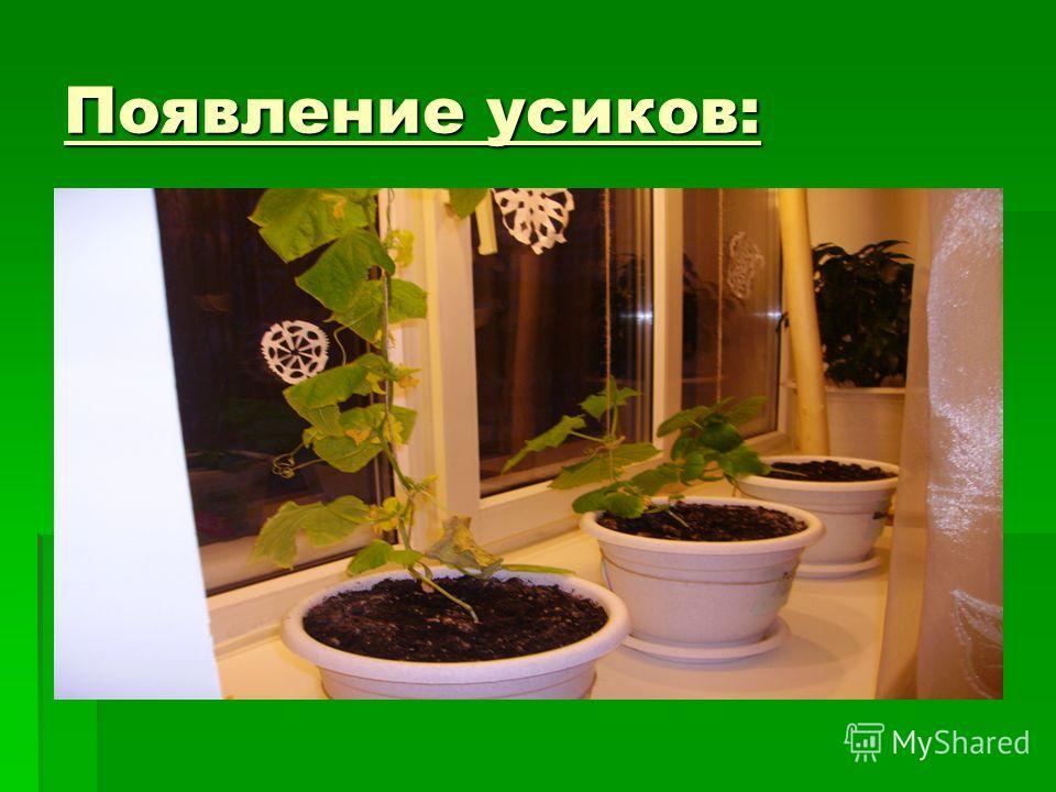 Появление усиков: